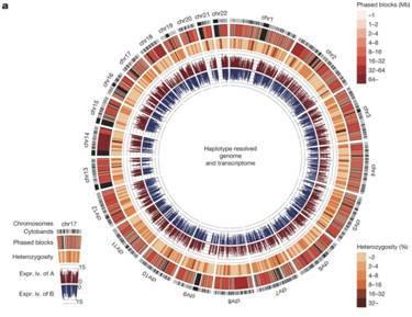 人类基因组计划:解读基因的奥秘